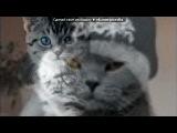 «Котятки» под музыку Мяуканье кошки - Слушать кошкам. Picrolla